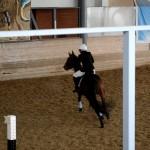 Соревнование по конкуру в КСК ИППО (Рио-Рита, английская чистокровная кобыла)