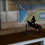 Соревнование по конкуру в КСК ИППО (Волга, полукровная кобыла)